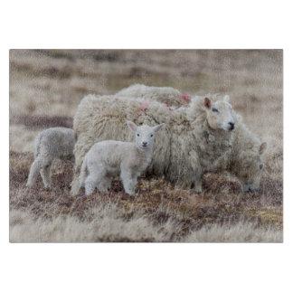 Shetland Sheep 2 Cutting Board