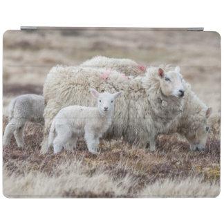 Shetland Sheep 2 iPad Cover