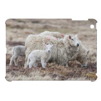 Shetland Sheep 2 iPad Mini Cases