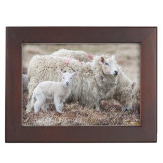 Shetland Sheep 2 Keepsake Box