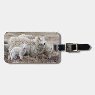 Shetland Sheep 2 Luggage Tag