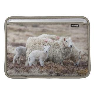 Shetland Sheep 2 Sleeves For MacBook Air