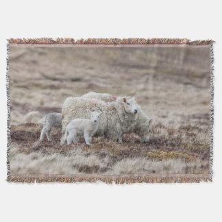 Shetland Sheep 2 Throw Blanket