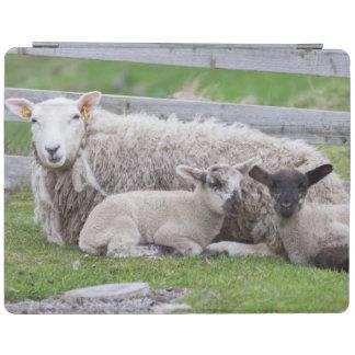 Shetland Sheep 3 iPad Cover