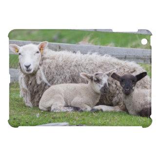 Shetland Sheep 3 iPad Mini Covers