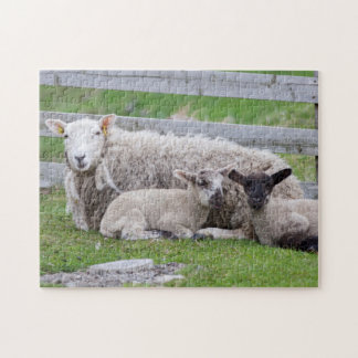 Shetland Sheep 3 Jigsaw Puzzle