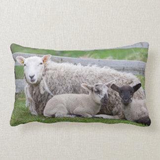 Shetland Sheep 3 Lumbar Cushion