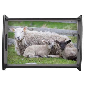 Shetland Sheep 3 Serving Tray