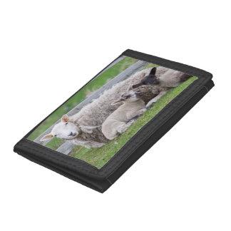 Shetland Sheep 3 Trifold Wallet