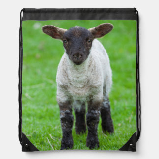 Shetland Sheep 4 Drawstring Bag