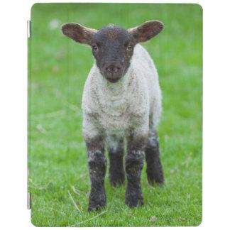 Shetland Sheep 4 iPad Cover