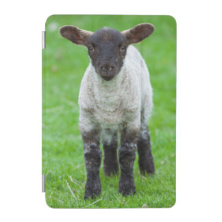 Shetland Sheep 4 iPad Mini Cover
