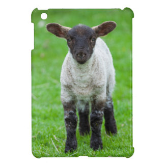 Shetland Sheep 4 iPad Mini Covers