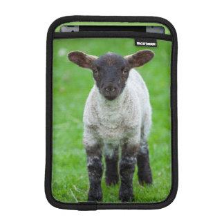 Shetland Sheep 4 iPad Mini Sleeve