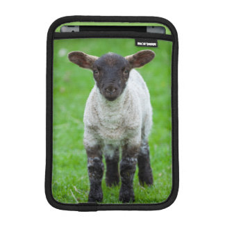 Shetland Sheep 4 iPad Mini Sleeves
