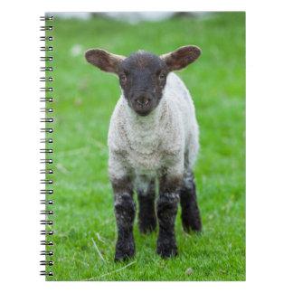 Shetland Sheep 4 Notebook