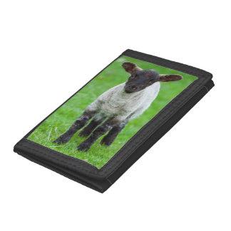 Shetland Sheep 4 Trifold Wallets