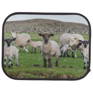 Shetland Sheep 5 Car Mat