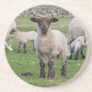 Shetland Sheep 5 Coaster