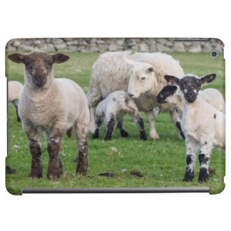 Shetland Sheep 5 Cover For iPad Air