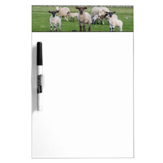 Shetland Sheep 5 Dry Erase Board