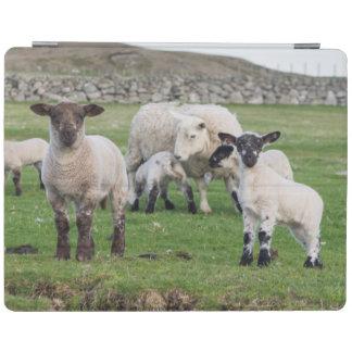 Shetland Sheep 5 iPad Cover