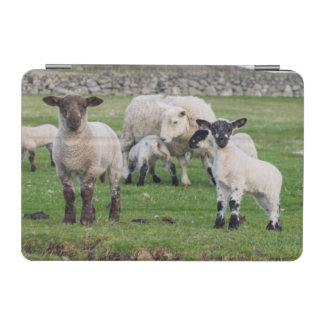 Shetland Sheep 5 iPad Mini Cover