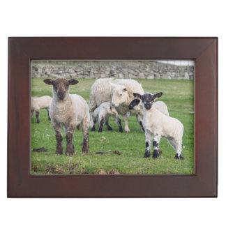 Shetland Sheep 5 Keepsake Box