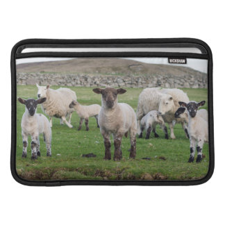 Shetland Sheep 5 MacBook Sleeve