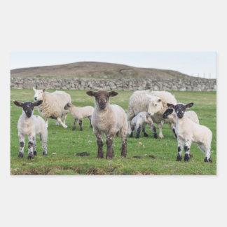 Shetland Sheep 5 Rectangular Sticker