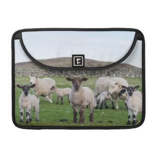 Shetland Sheep 5 Sleeve For MacBook Pro