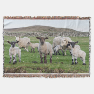 Shetland Sheep 5 Throw Blanket