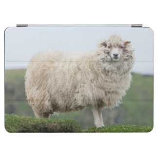 Shetland Sheep iPad Air Cover
