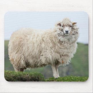 Shetland Sheep Mouse Mat