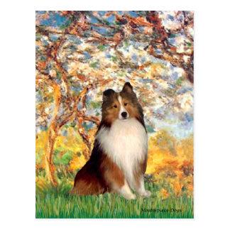 Shetland Sheepdog 1 - Spring Postcard