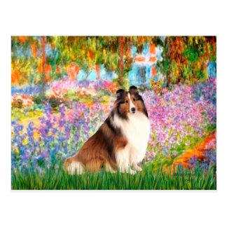 Shetland Sheepdog 7 - Garden Postcard