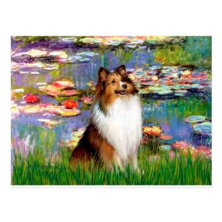 Shetland Sheepdog (Bz) - Lilies 2 Postcard