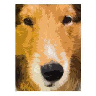 Shetland Sheepdog Close-Up Postcard
