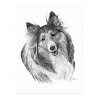 Shetland Sheepdog Drawing by Glenda S. Harlan Postcard