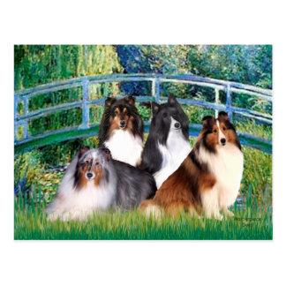 Shetland Sheepdog (four) - Bridge Postcard