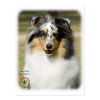 Shetland Sheepdog Postcard
