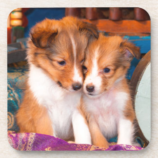 Shetland Sheepdog puppies sitting by wooden wagon Coaster