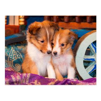 Shetland Sheepdog puppies sitting by wooden wagon Postcard