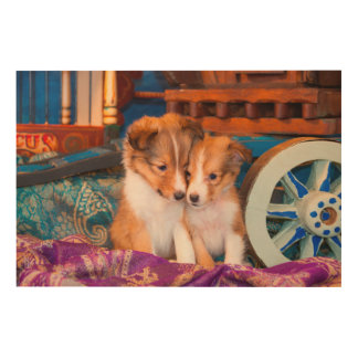 Shetland Sheepdog puppies sitting by wooden wagon Wood Canvas