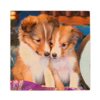 Shetland Sheepdog puppies sitting by wooden wagon Wood Coaster