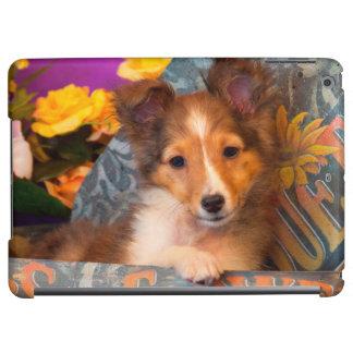 Shetland Sheepdog puppy in a hat box