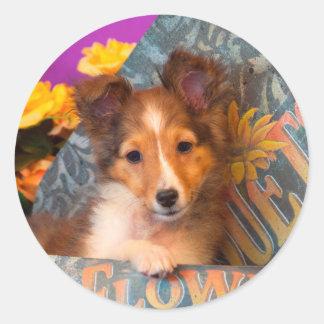 Shetland Sheepdog puppy in a hat box Classic Round Sticker