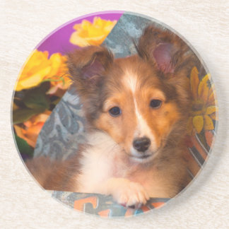 Shetland Sheepdog puppy in a hat box Coaster