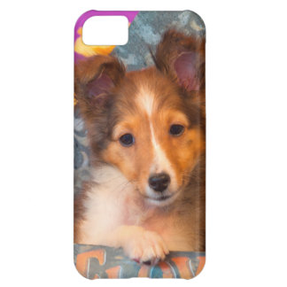 Shetland Sheepdog puppy in a hat box iPhone 5C Case