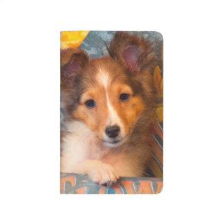 Shetland Sheepdog puppy in a hat box Journal